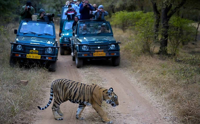 ajmer to ranthambore taxi